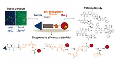 Chemical Design of Tumor-Targeted Drug Conjugates